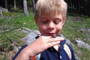 respekt - vertrauen - freude. alpenskorpione findet man am weissensee häufig. falls einmal einer stechen sollte (was sehr unwahrscheinlich ist), dann ist das völlig harmlos. - © martin müller